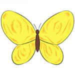 How to Draw a Butterfly Easy for Kids
