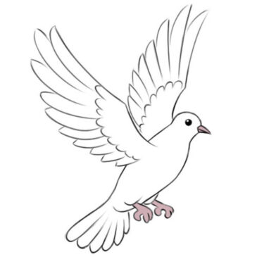 How to Draw Dove for Kids