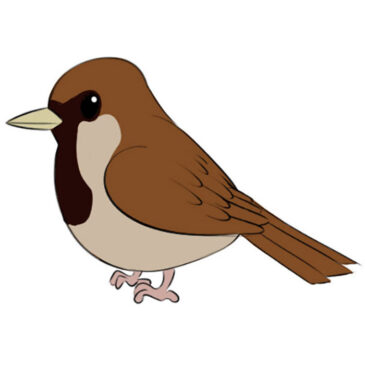 How to Draw a Sparrow for Kids