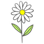 How to Draw a Chamomile