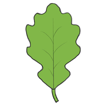 How to Draw a Leaf for Kindergarten